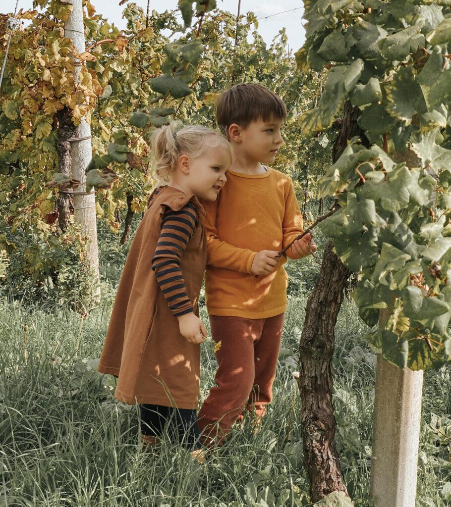 Passeggiata tra le vigne del prosecco